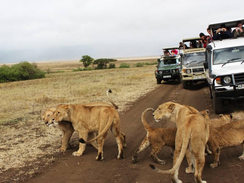 A Kenya & Tanzania Safari
