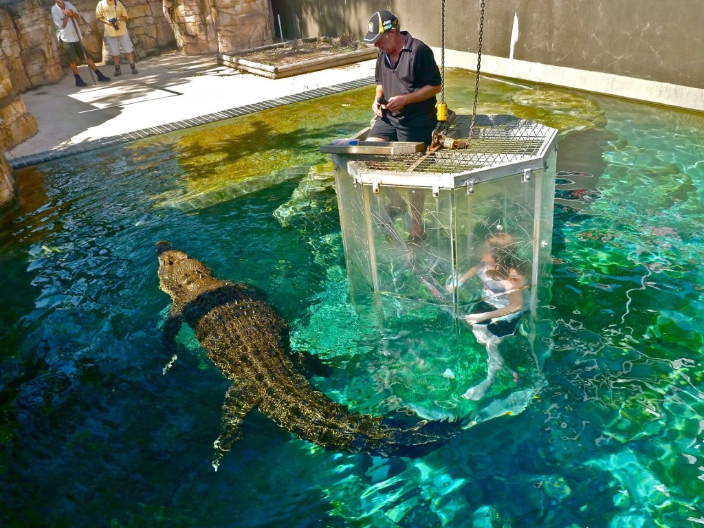 Crocodile Diving