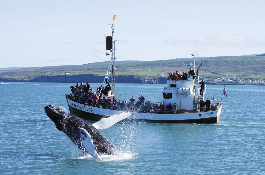 Iceland Boat Tours