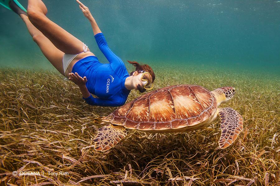 kate-walsh-belize-turtle-oceana